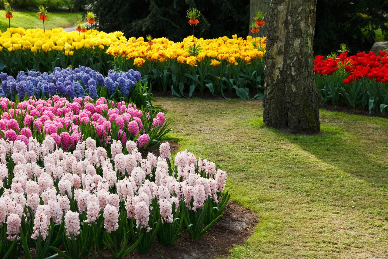 Significado de las flores significado origen y toda la - Significado de los colores de las rosas ...