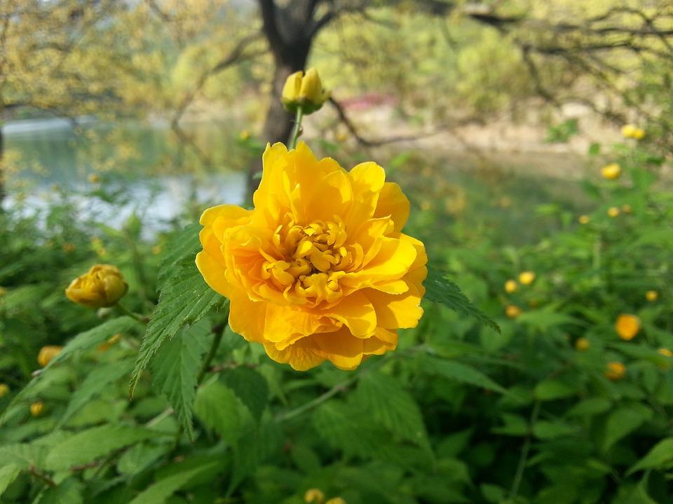 Flores De Color Amarillo Significado Propiedades Y Beneficios