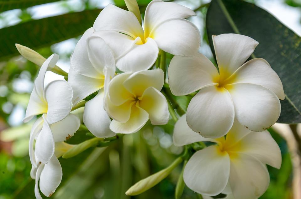 Flores Blancas Significado Propiedades Y Beneficios