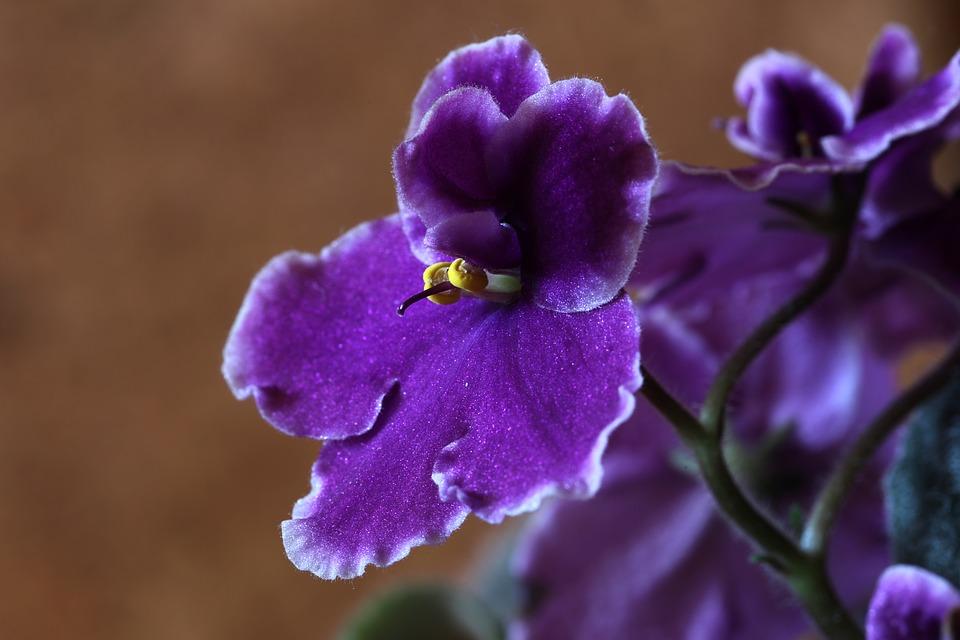 Flores De Color Morado Significado Propiedades Y Beneficios