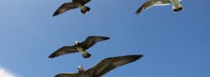 Nombres de pájaros