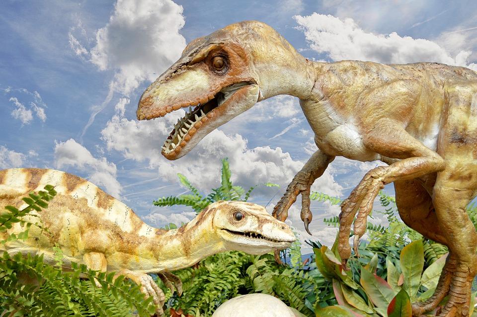Nombres De Dinosaurios Su Significado Y Origen Conocelo Ahora Los nombres de los dinosaurios han sido otorgados por los científicos a los diferentes grupos de algunos ejemplos de dinosaurios que llevan el nombre del lugar en el que fueron encontrados son. nombres de dinosaurios su