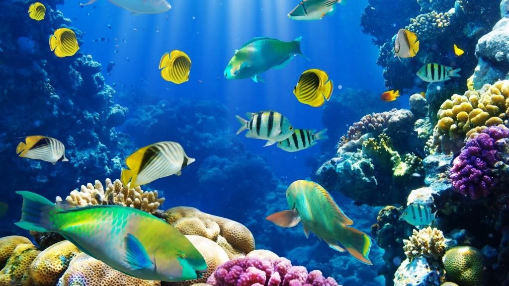 ecosistema acuáticos