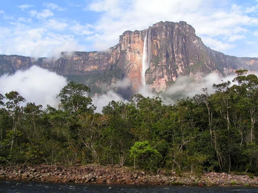 selva bioma