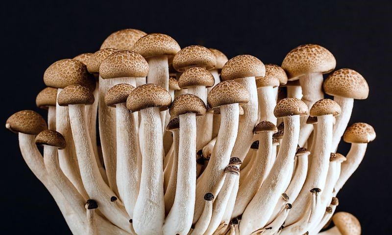 reino fungi hongos