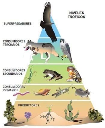 animales carnívoros animados