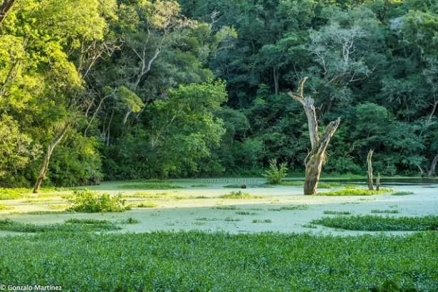 selva basal