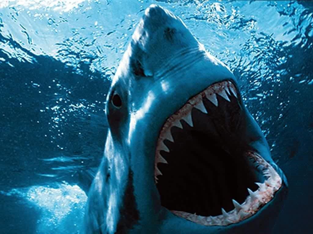 reino animal acuático