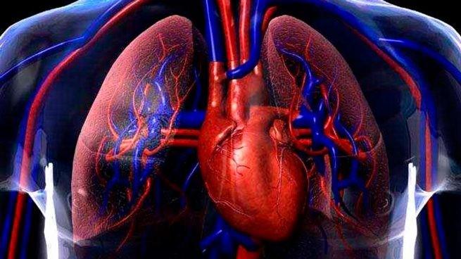sistema circulatorio anatomía