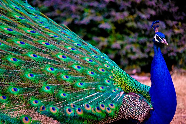reino animal aves