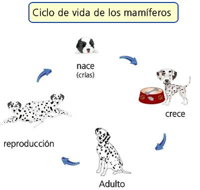 mamíferos animados