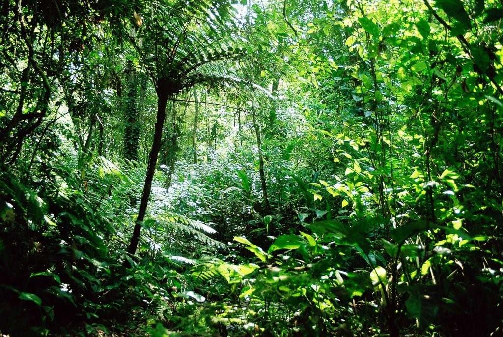 selva perennifolia
