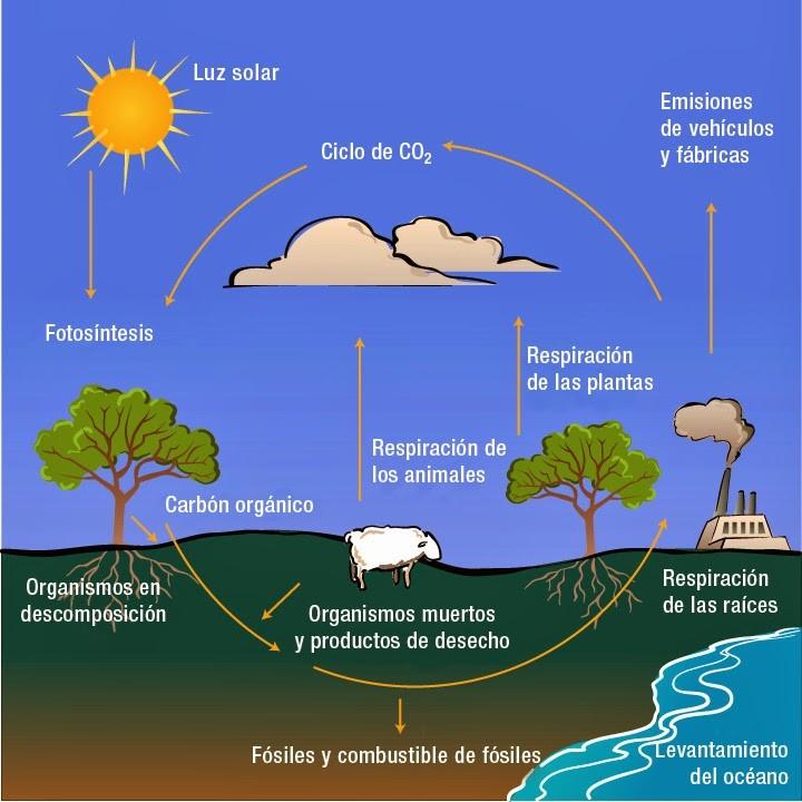 dióxido de carbono animado