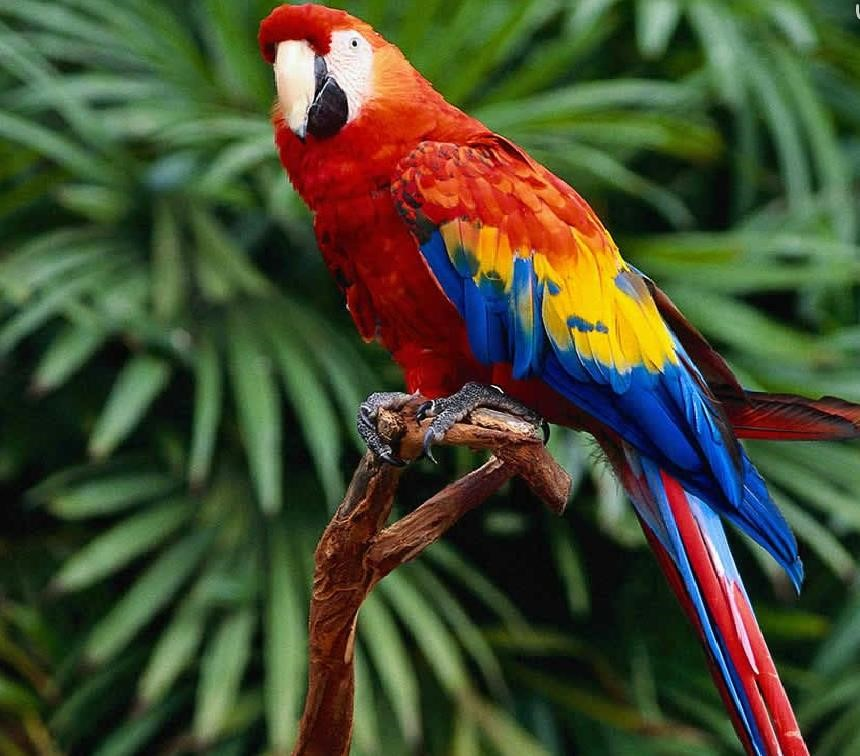 animales herbívoros aves ejemplo
