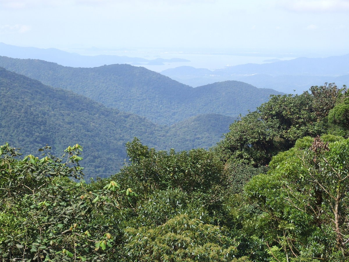 selvas subtropicales