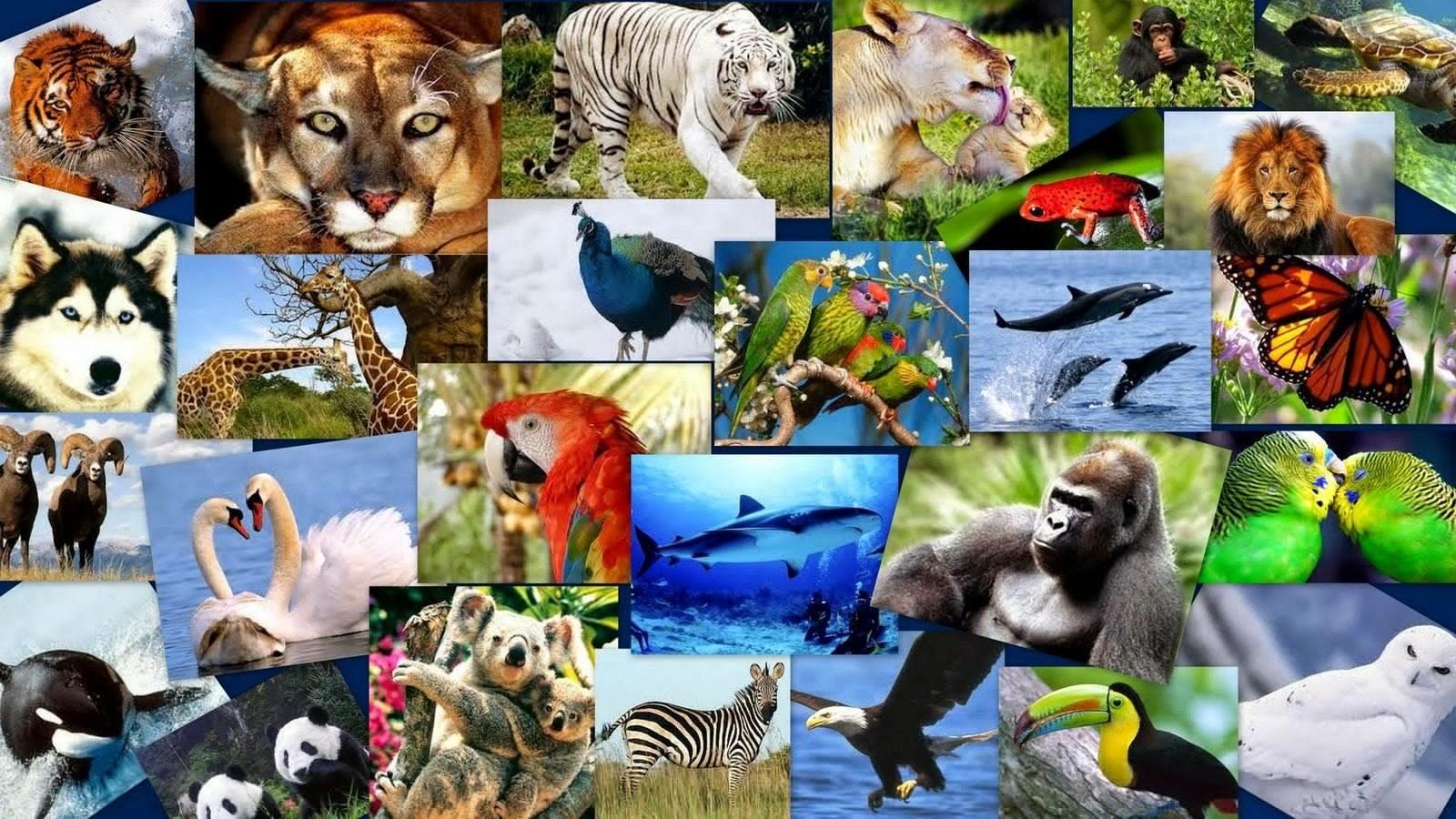 reino animal definición