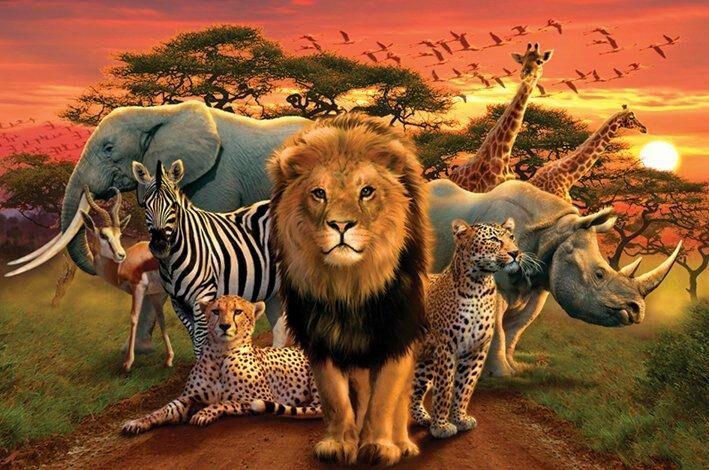 seres vivos animales