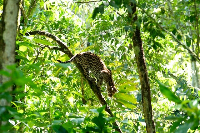 selva fauna