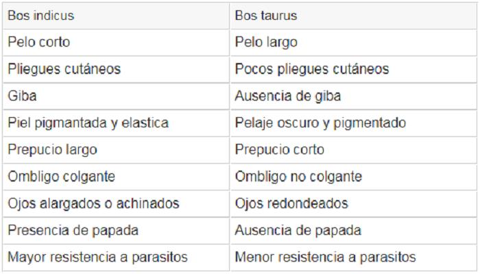 Bos taurus y Bos indicus