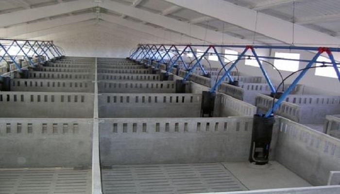 Granja ganado bovino