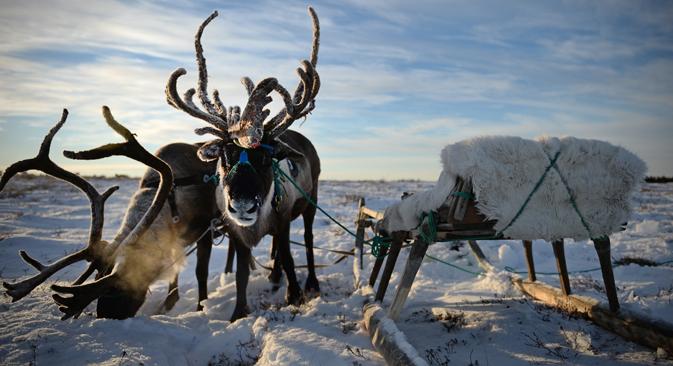 tundra fauna