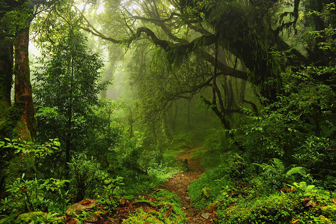 seres vivos reino vegetal