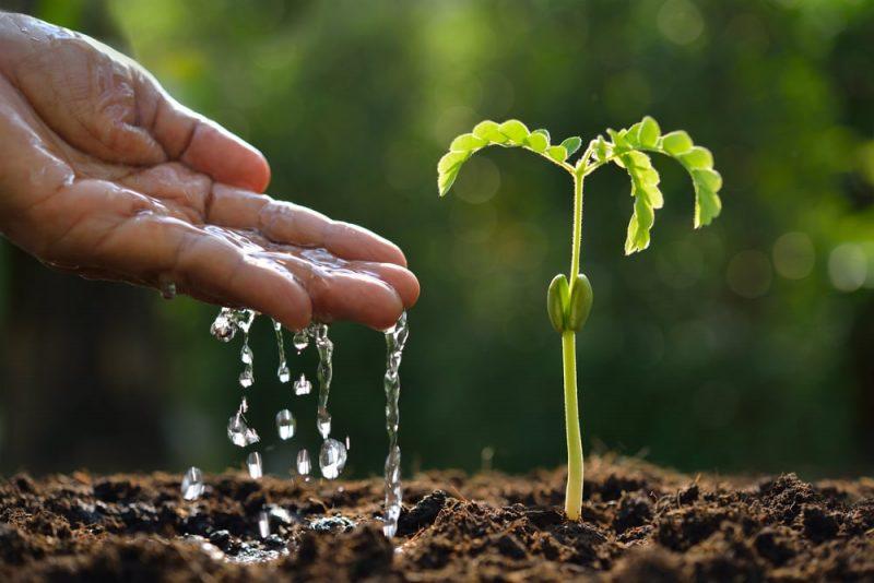 reino plantae o vegetal