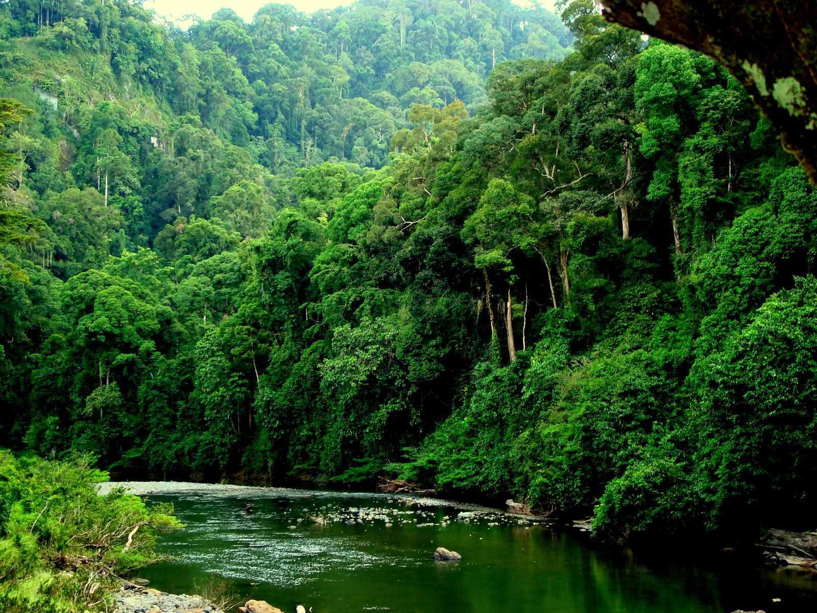 Resultado de imagen para bosques tropicales de inundación