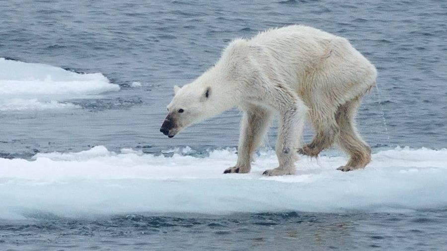 calentamiento global efectos