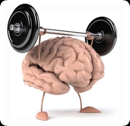cerebelo animado