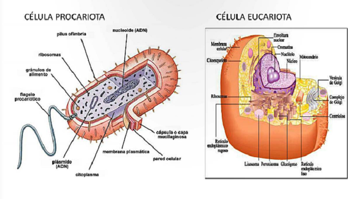 Célula procariota y eucariota diferencias