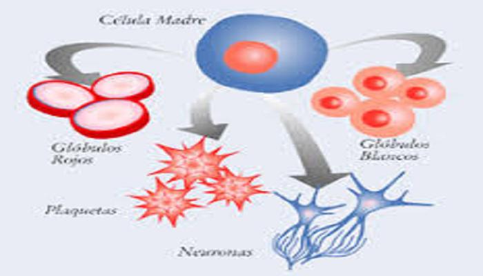 Tejidos que originan las células madre