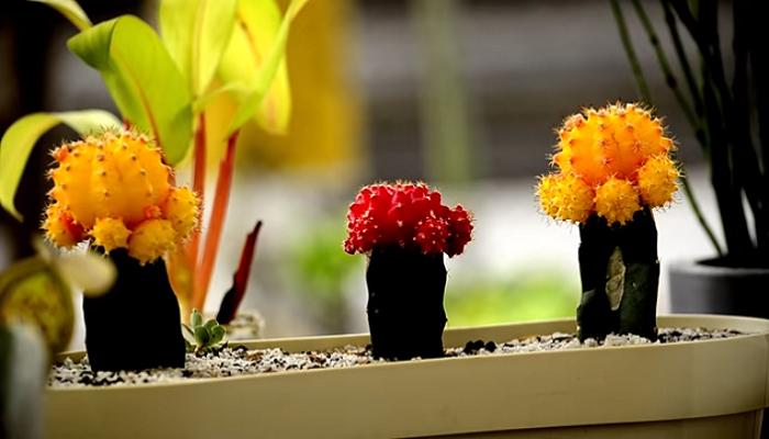 Los Cactus y su abonado