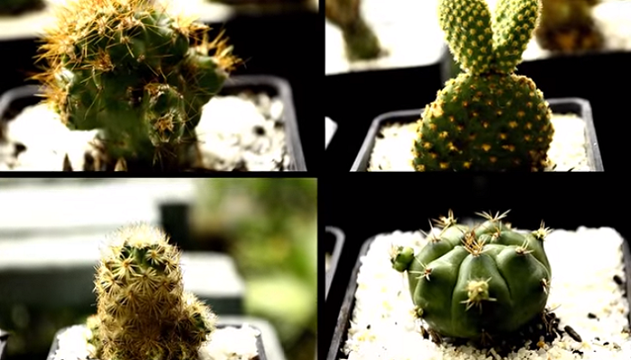 Cactus y sustratos