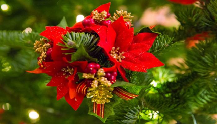 La planta de navidad en la navidad