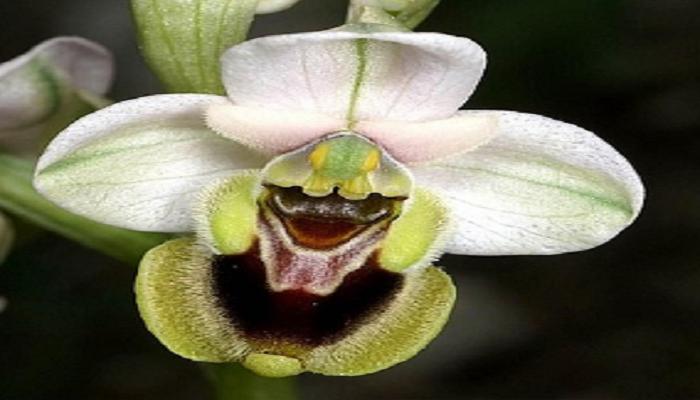 Plantas de orquidea