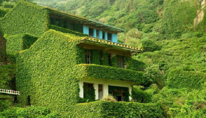 Plantas trepadoras que cubren superficies