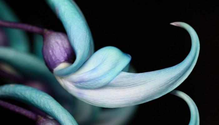 Plantas trepadoras color turquesa