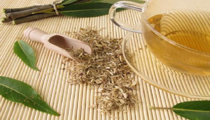 Propiedades medicinales de Salix alba