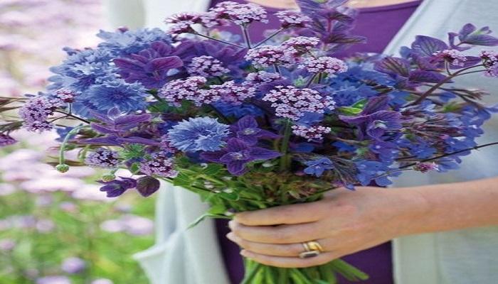 Aciano flor ornamental