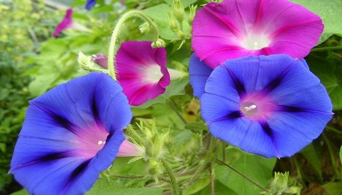 Flores Campanillas colgantes