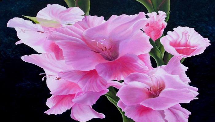 Gladiolos rosa