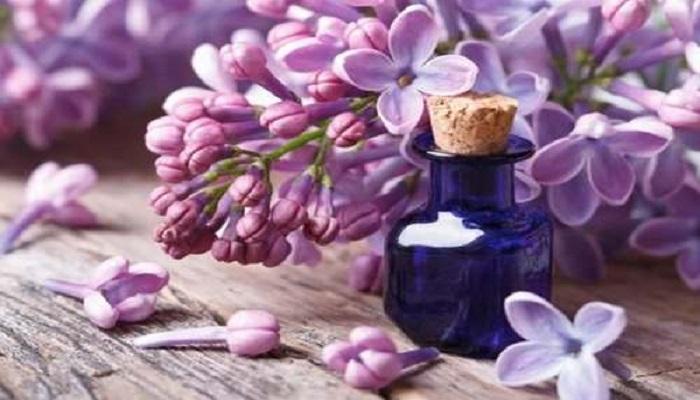 Propiedades medicinales de las Lilas