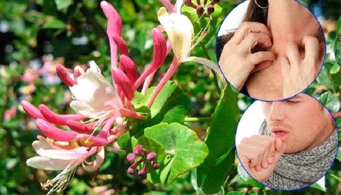 Propiedades medicinales de las Madreselvas