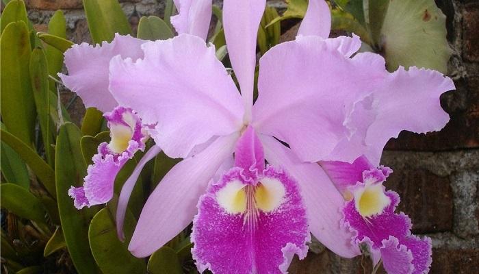 Cuándo trasplantar Orquídeas