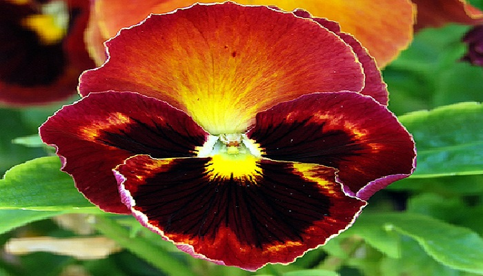 Flores de Pensamientos