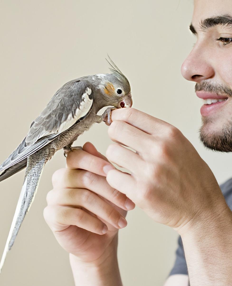 soñar con aves dentro de la casa