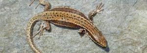 Soñar con reptiles