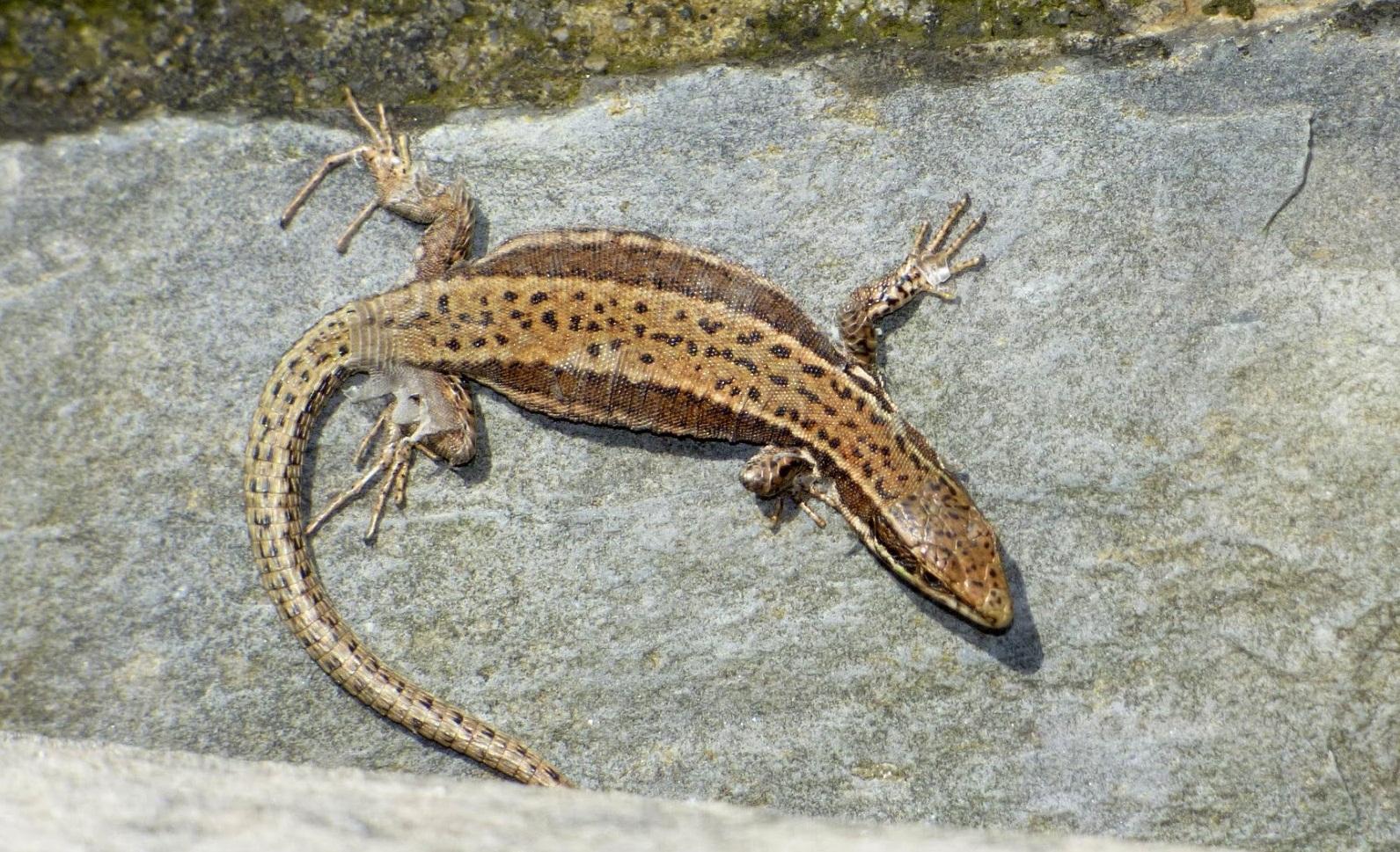 soñar con diferentes reptiles