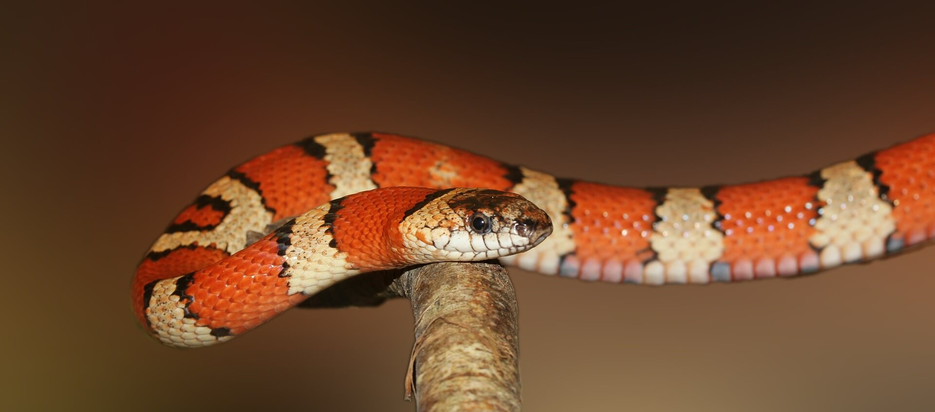 soñar con animales reptiles